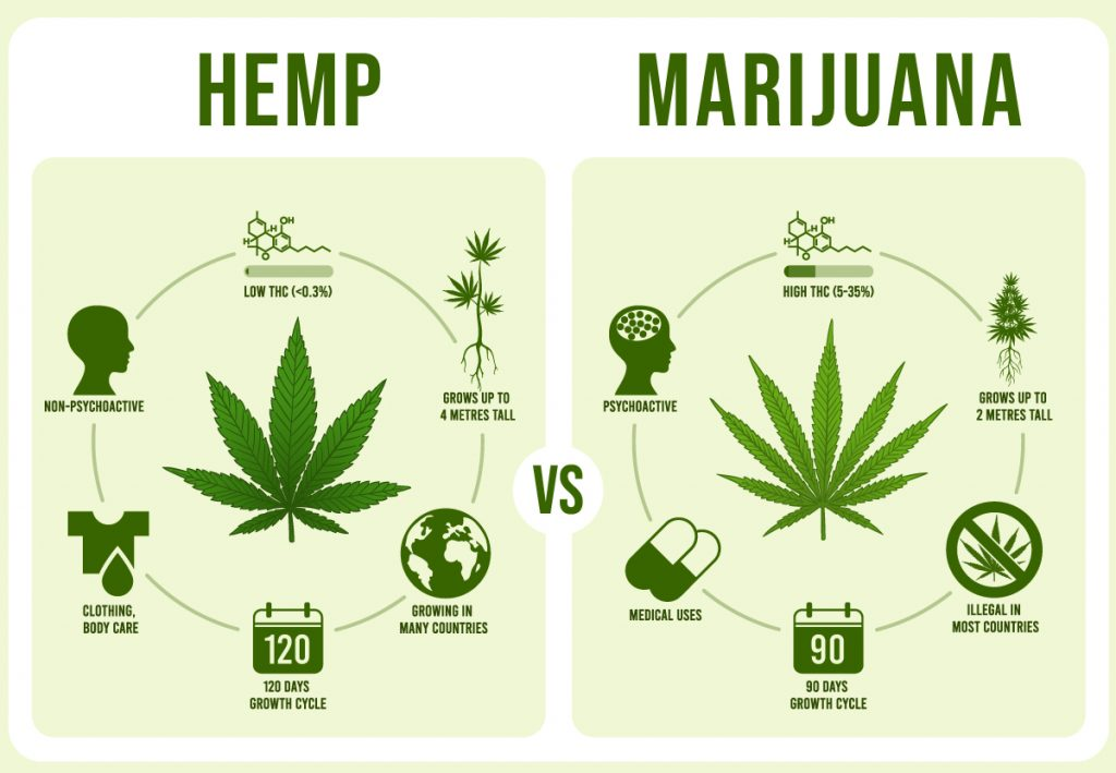 hemp or marijuana?